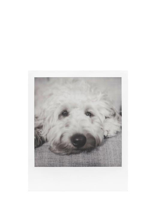 rinascente Polaroid Films 600 B&W